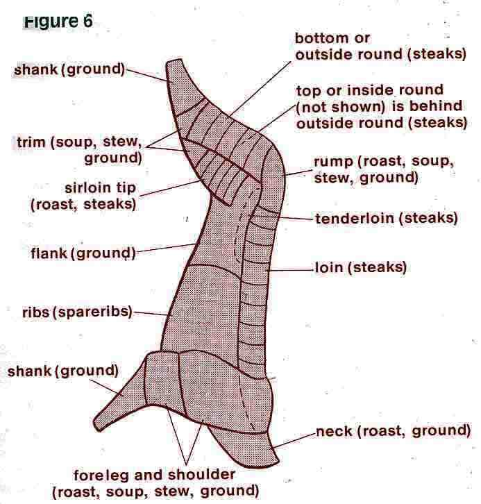 Moose Anatomy Diagram http://thefiringline.com/forums/showthread.php?p=4953780